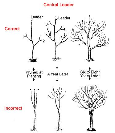 Tree Trimming and Pruning Tips At Home